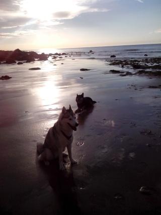 Cradok et Freaks à la plage... c'est Freaks qui raconte Img_2014
