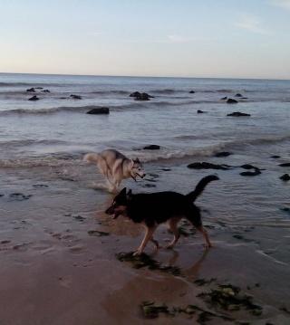 Cradok et Freaks à la plage... c'est Freaks qui raconte Img_2015