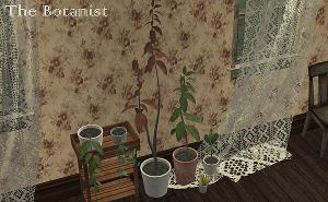 Цветы для дома - Страница 9 Uten_673