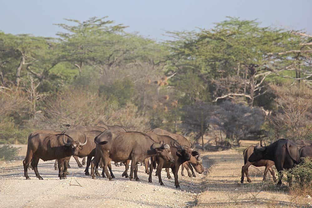 Vols de brousse en Tanzanie .     - Page 13 Img_5912