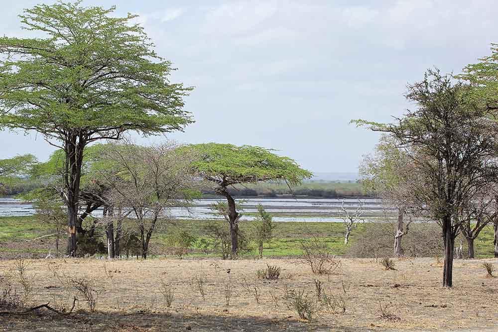 Vols de brousse en Tanzanie .     - Page 14 Img_6013