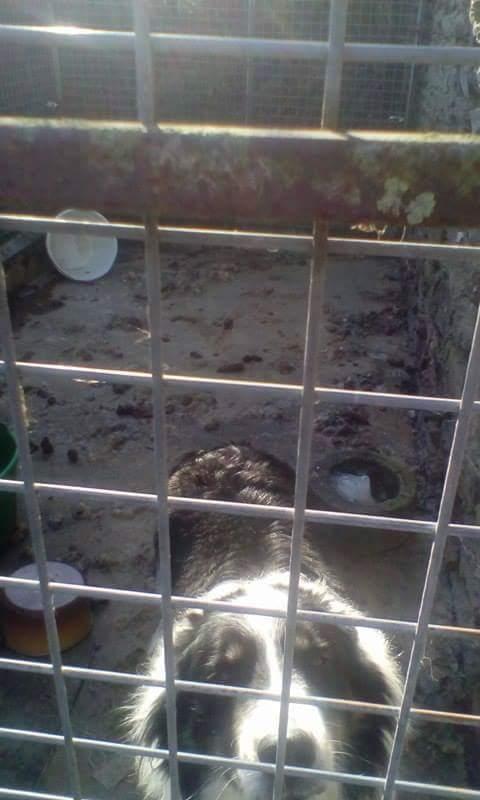 Border de 2009 - St Malon sur Mel (35) - asso Border Line Collie Fb_img11