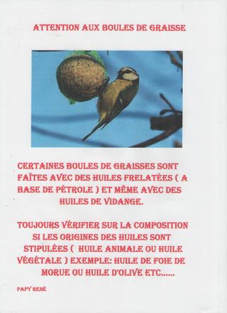 ABC du canari - Portail Numyri10