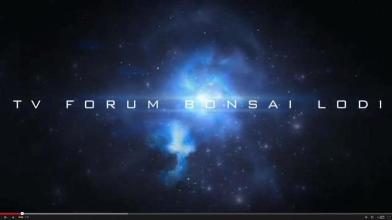 Forum Bonsai Lodi - Portale Dirett12