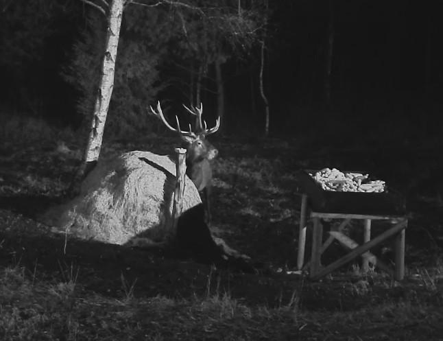 Red Deer Cam (Saarema Island)  - Page 31 2016-110
