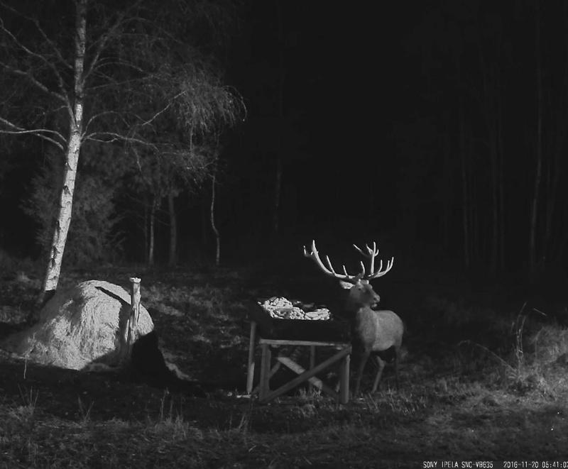 Red Deer Cam (Saarema Island)  - Page 31 2016-111
