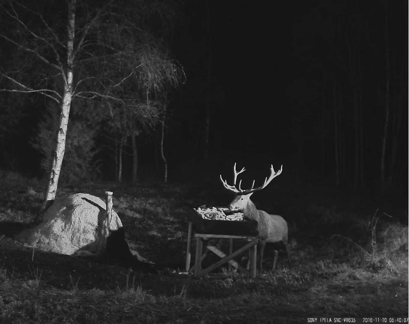 Red Deer Cam (Saarema Island)  - Page 31 2016-112