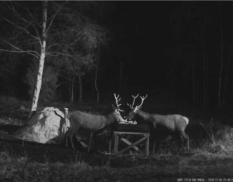 Red Deer Cam (Saarema Island)  - Page 31 2016-113