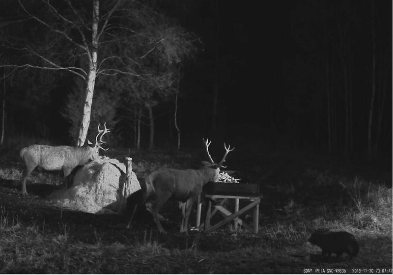 Red Deer Cam (Saarema Island)  - Page 31 2016-115