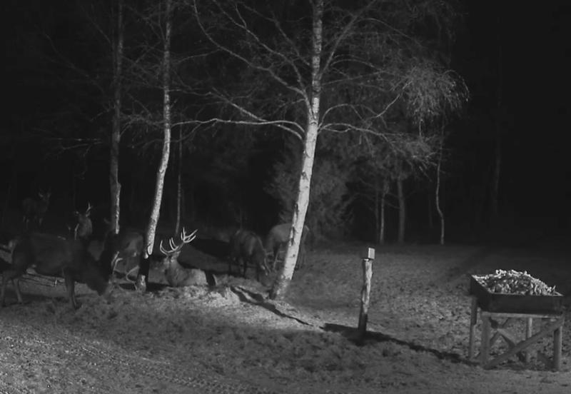 Red Deer Cam (Saarema Island)  - Page 32 2017-010