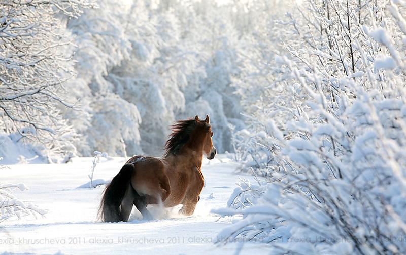 """""""Bonjour / Bonsoir"""" !!! - Page 4 Winter11"""