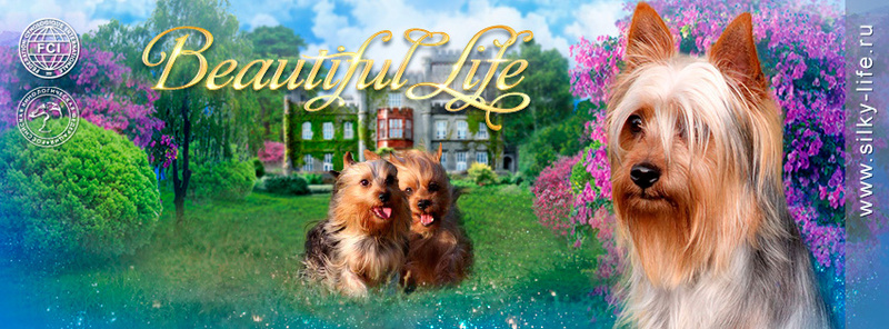 Форум  питомника  Beautiful Life.