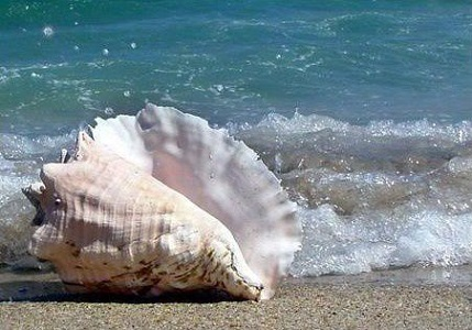 Le coquillage au bord de la mer - Alphonse de Lamartine Le_coq10