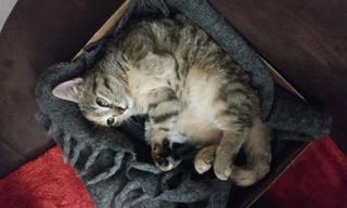 1 chaton femelle, 2 mois et demi, Var Fifty_10