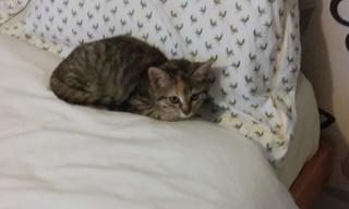 1 chaton femelle, 2 mois et demi, Var Fifty_11