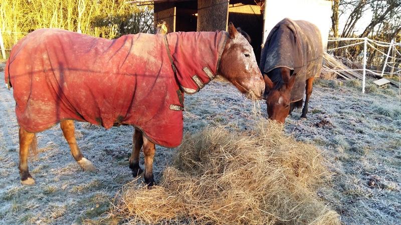 INDIANA - OI type poney née en 1994 - adoptée en juillet 2016 par Adeline 20161211