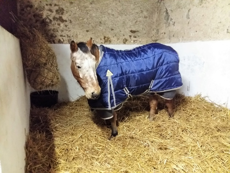 INDIANA - OI type poney née en 1994 - adoptée en juillet 2016 par Adeline 20161212