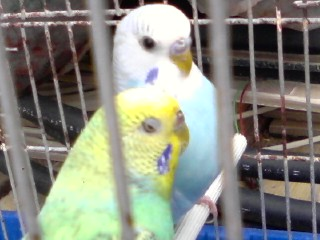 nido x coco P29-0610