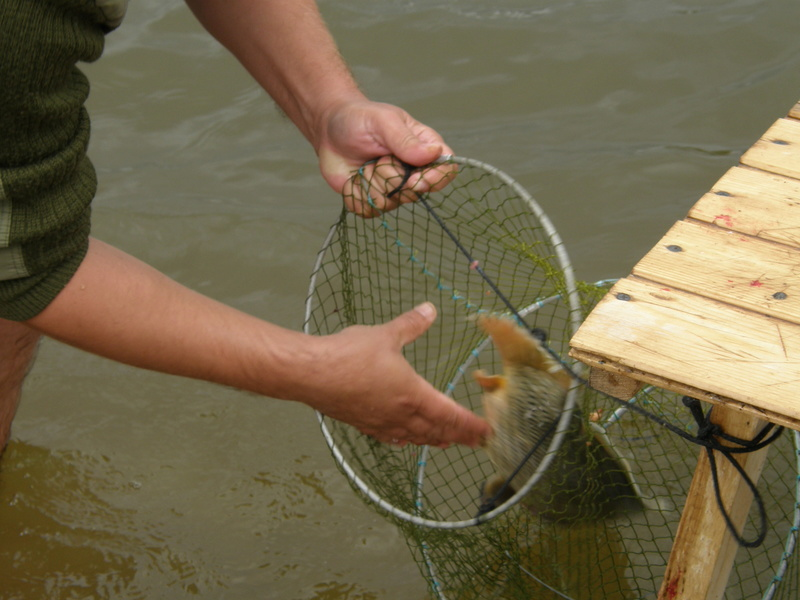 Рыбалка на Волге - Страница 2 P1010083