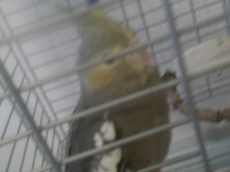 3 Nouveau arriver ... QUOI !!! Oiseau11