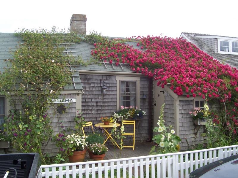 Nantuckett USA, l'art du jardin anglais. 100_7210