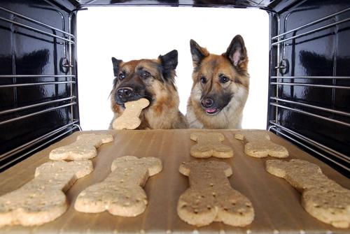 Für unsere tierischen Schlossbewohner ;-)  Hundek10