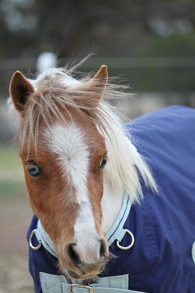 I have a new Mini Pony.... ;-) Img_2110