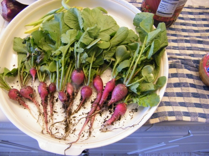 Radish Recipes Rad_ra10