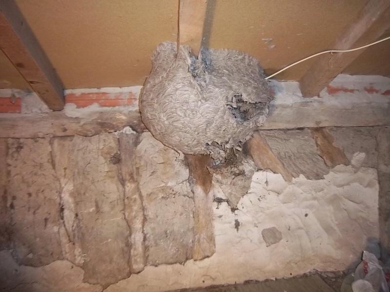 Trouvé un nid 100_9711
