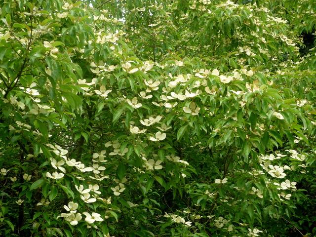 (29) Arboretum de Keracoual - Henvic  P1230412