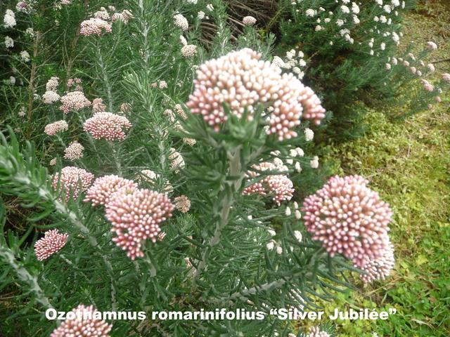 (29) Arboretum de Keracoual - Henvic  P1230415