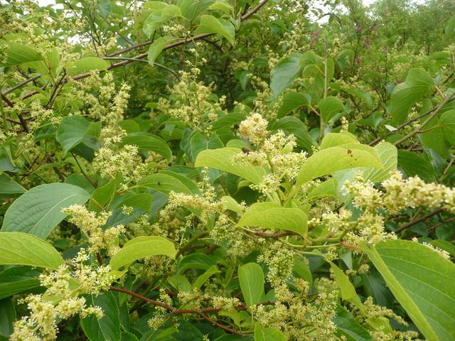 (29) Arboretum de Keracoual - Henvic  P1230416