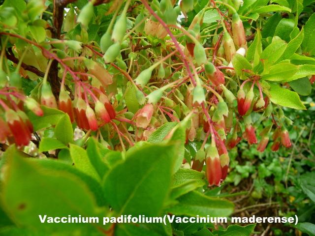 (29) Arboretum de Keracoual - Henvic  P1230417