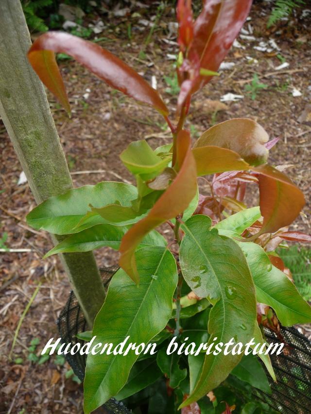 (29) Arboretum de Keracoual - Henvic  P1230426