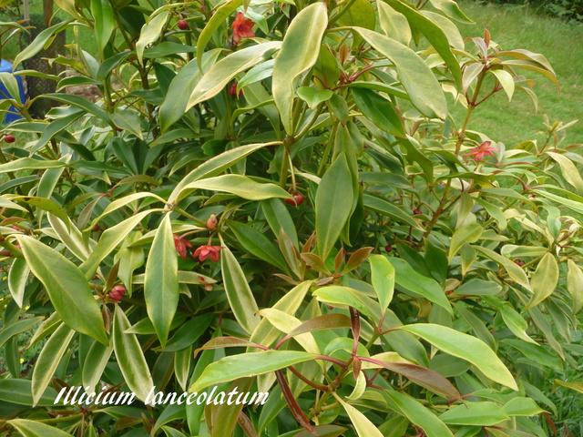 (29) Arboretum de Keracoual - Henvic  P1230428