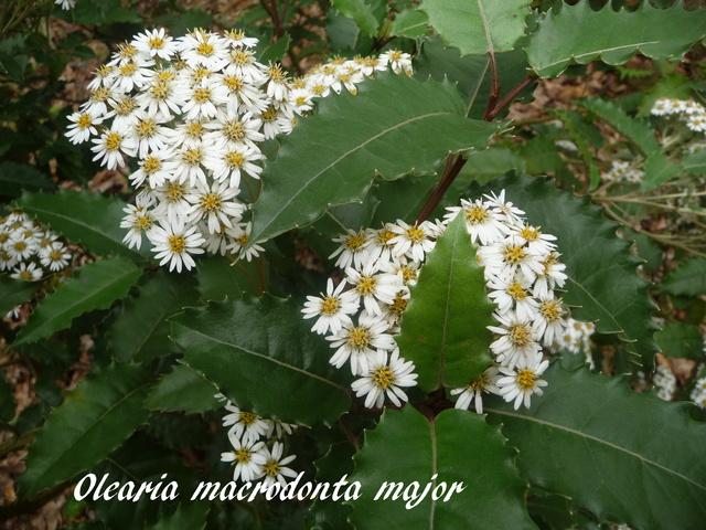 (29) Arboretum de Keracoual - Henvic  - Page 2 P1230440