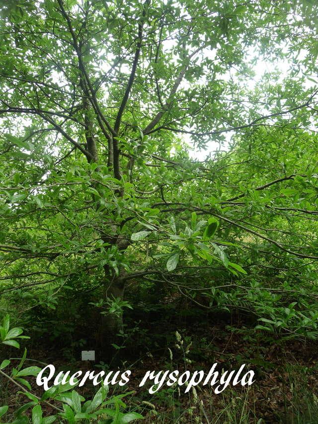 (29) Arboretum de Keracoual - Henvic  - Page 2 P1230442