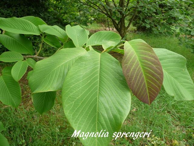 (29) Arboretum de Keracoual - Henvic  - Page 2 P1230512