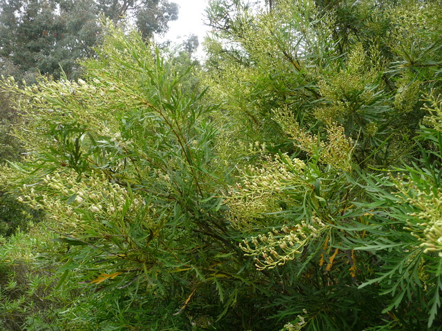 (29) Arboretum de Keracoual - Henvic  - Page 2 P1230517