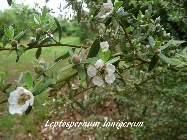 (29) Arboretum de Keracoual - Henvic  - Page 2 P1230519