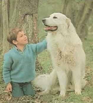 Quel sont vos films préférés avec des chiens ? - Page 2 Belle_10