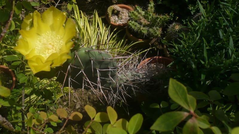 Un petit jardin P1030310