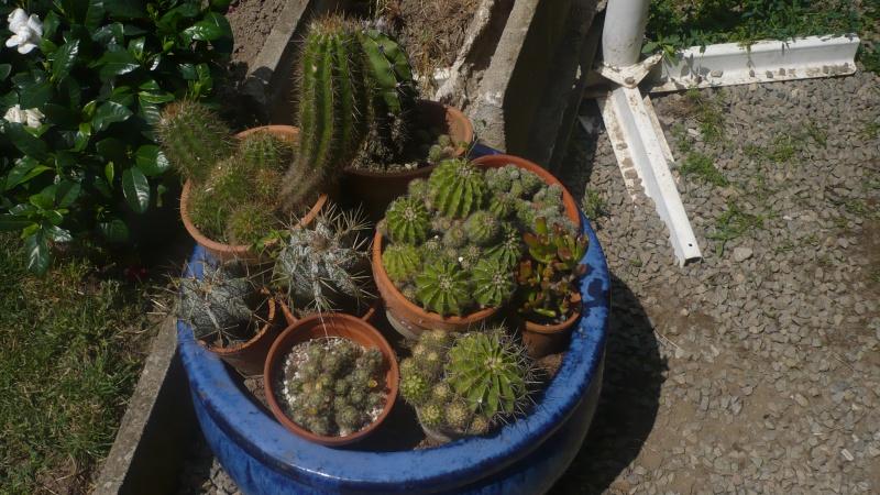 Un petit jardin P1030313