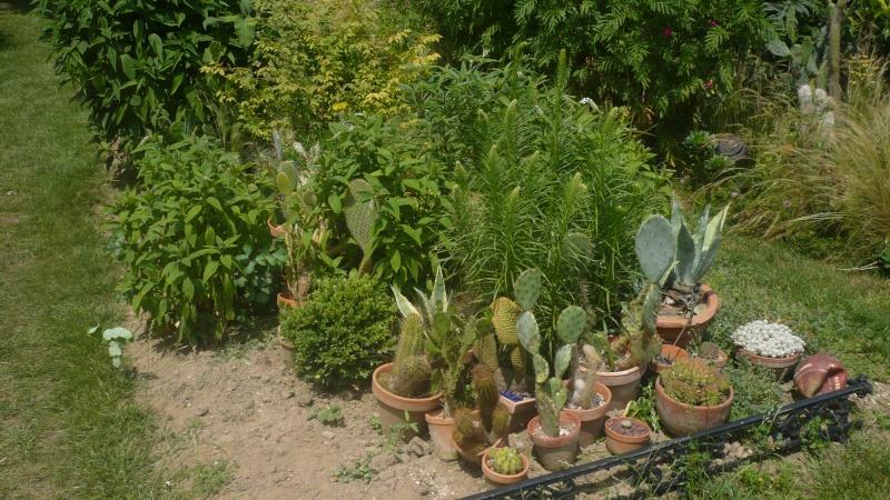Un petit jardin P1030315