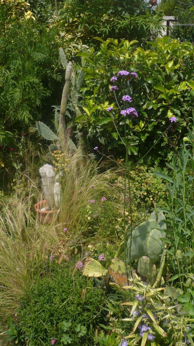 Un petit jardin P1030316