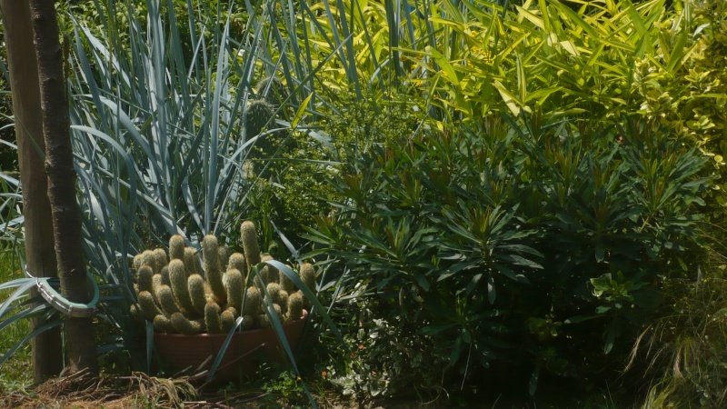 Un petit jardin P1030317