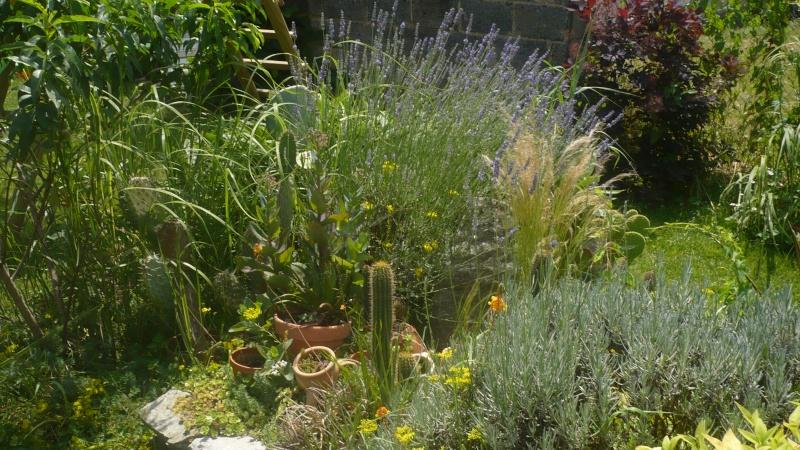 Un petit jardin P1030318