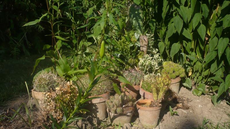 Un petit jardin P1030319