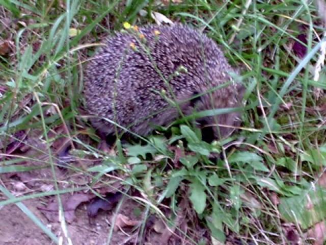 Une surprise dans mon Jardin Her0210