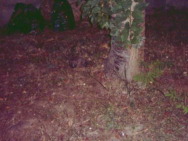Une surprise dans mon Jardin Heriss10